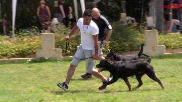 Esposizione canina