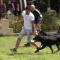 XXVIII Esposizione canina a Marsala